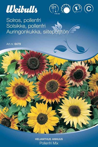 Solros pollenfri mix