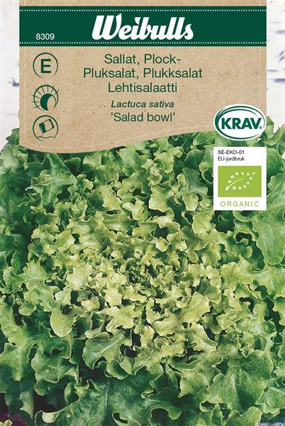 Sallat Plock- 'Salad Bowl' KRAV Organic