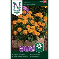 Tagetes Sammets- 'Mowgli Orange'