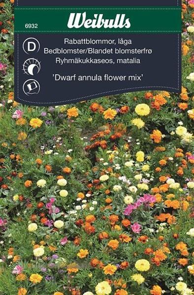 Mix Rabattblommor 'Dwarf Annula Flower' låga