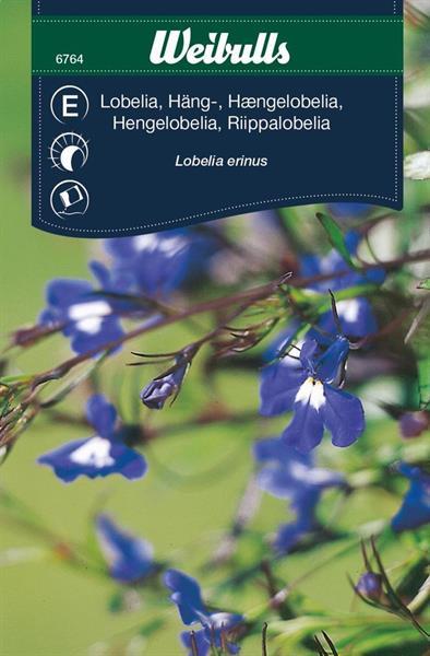 Lobelia Häng- blå