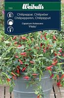Chilipeppar 'Pikito'
