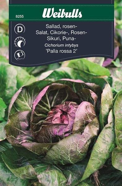 Sallat Rosen- 'Palla Rossa 2'