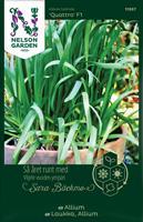 Allium 'Quattro' F1