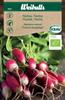 Rädisa 'French Breakfast' KRAV Organic