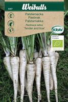 Palsternacka 'Tender and True' KRAV Organic