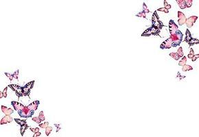 Oasis Kort butterflies on white