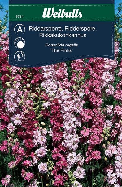 Riddarsporre Sommar- 'The Pinks'