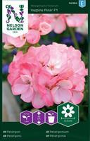 Pelargon Inspire Pink F1, rosa