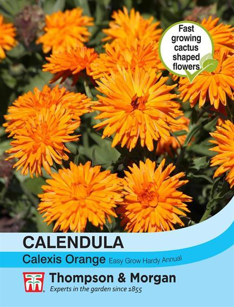 Ringblomma  'Calexis Orange'