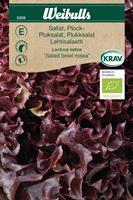 Sallat Plock- 'Salad Bowl Rossa' KRAV Organic