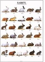 Plansch - Kaniner 1