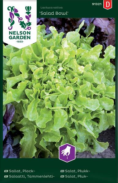 Sallat Plock- 'Salad Bowl'