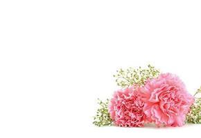 Oasis Kort Pink Carnation & Gyp