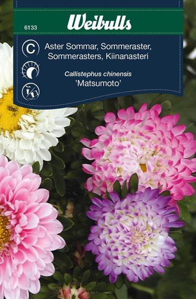 Aster pastell sommar