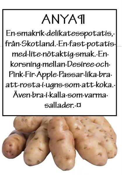 Potatis tvättad Anya ca 1kg
