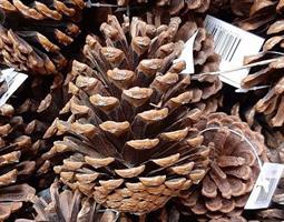 Kottar 5-10 Deco natur 200st/fp