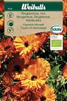 Ringblomma 'Touch of red/orange' mix Krav Organic
