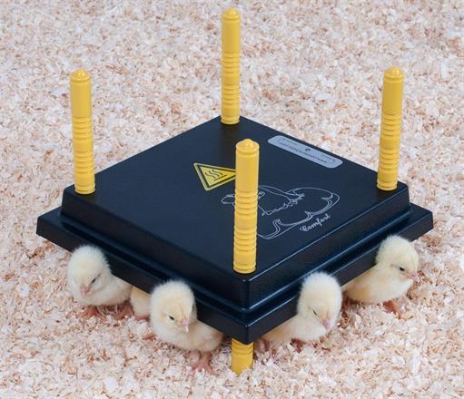 Värmetak till kycklingar - flera storlekar!
