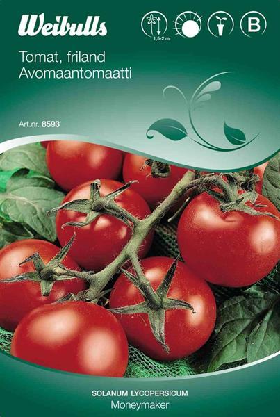 Tomat 'Moneymaker' friland