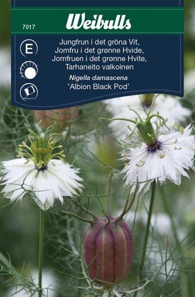Jungfrun i det gröna Vit 'Albion Black Pod'