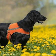 Brava ATTE Koiran huomioliivi, M
