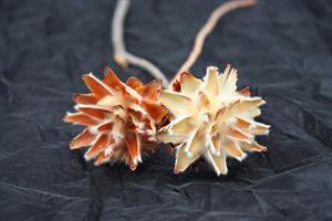 Plumosum med gren 20/fp