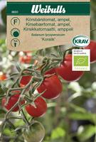Tomat Ampel- 'Koralik' KRAV Organic