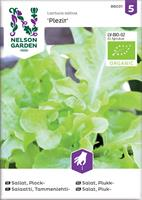 Sallat Plock- 'Plezir' Organic