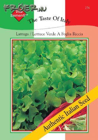 Sallat Plock- 'Verde da Taglio'