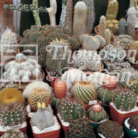 Kaktus Special mix