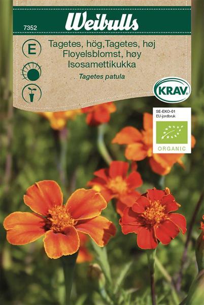 Tagetes hög KRAV Organic