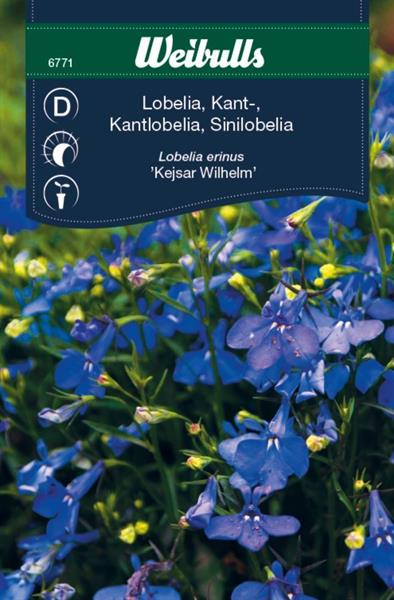 Lobelia Kant- blå