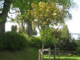 Acer plat Globosum 80 stam