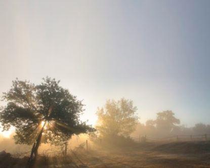 Bærekraftig skogbruk