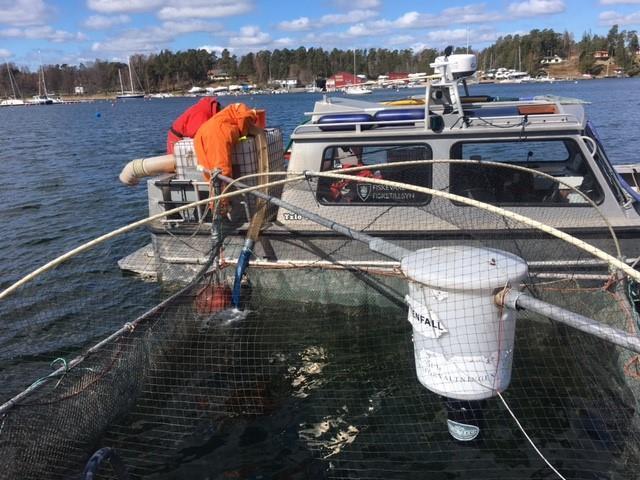 Nya öringar till präglingskassen på Dalarö