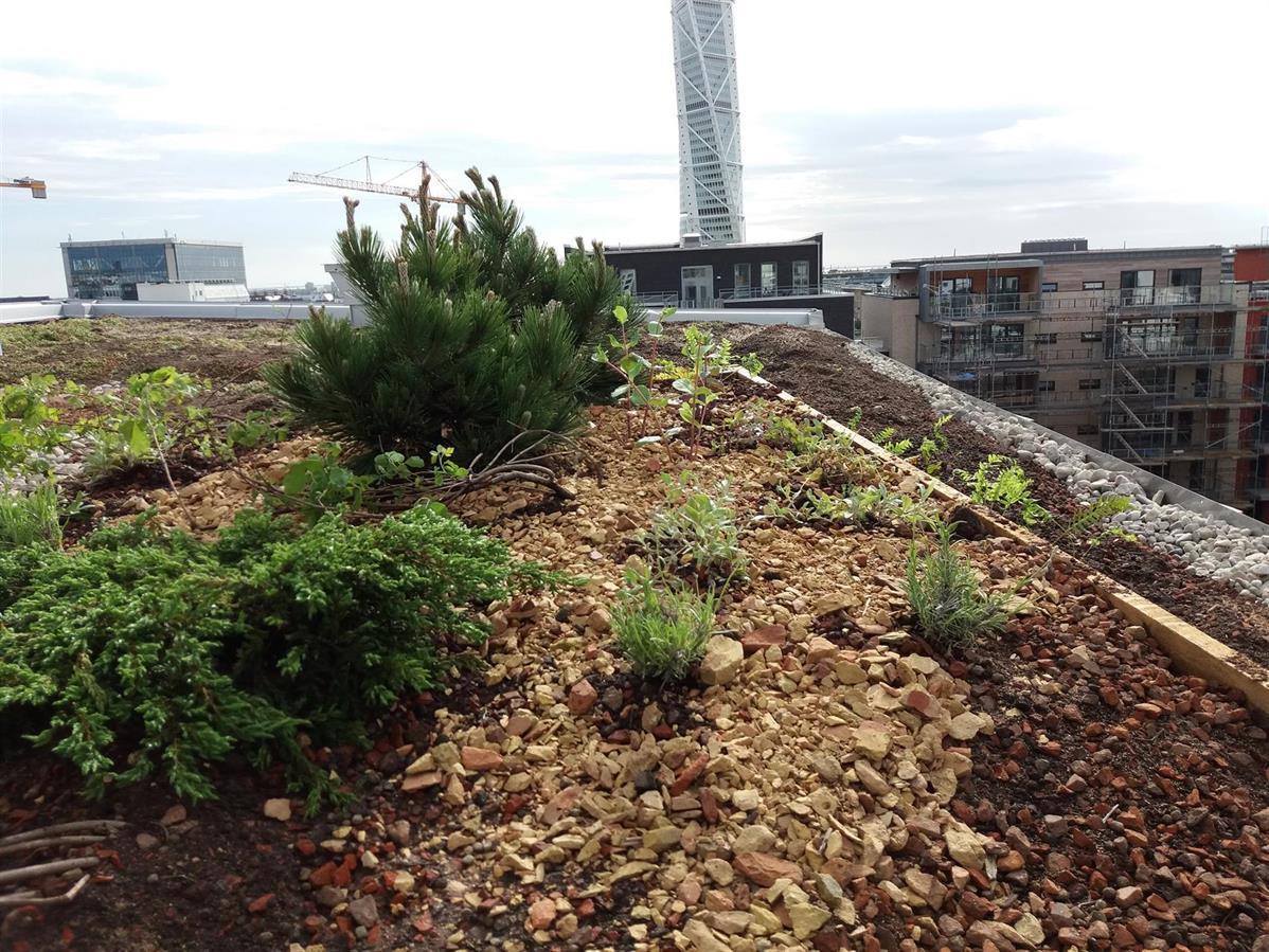 Designat tak med buskar, perenner och annueller