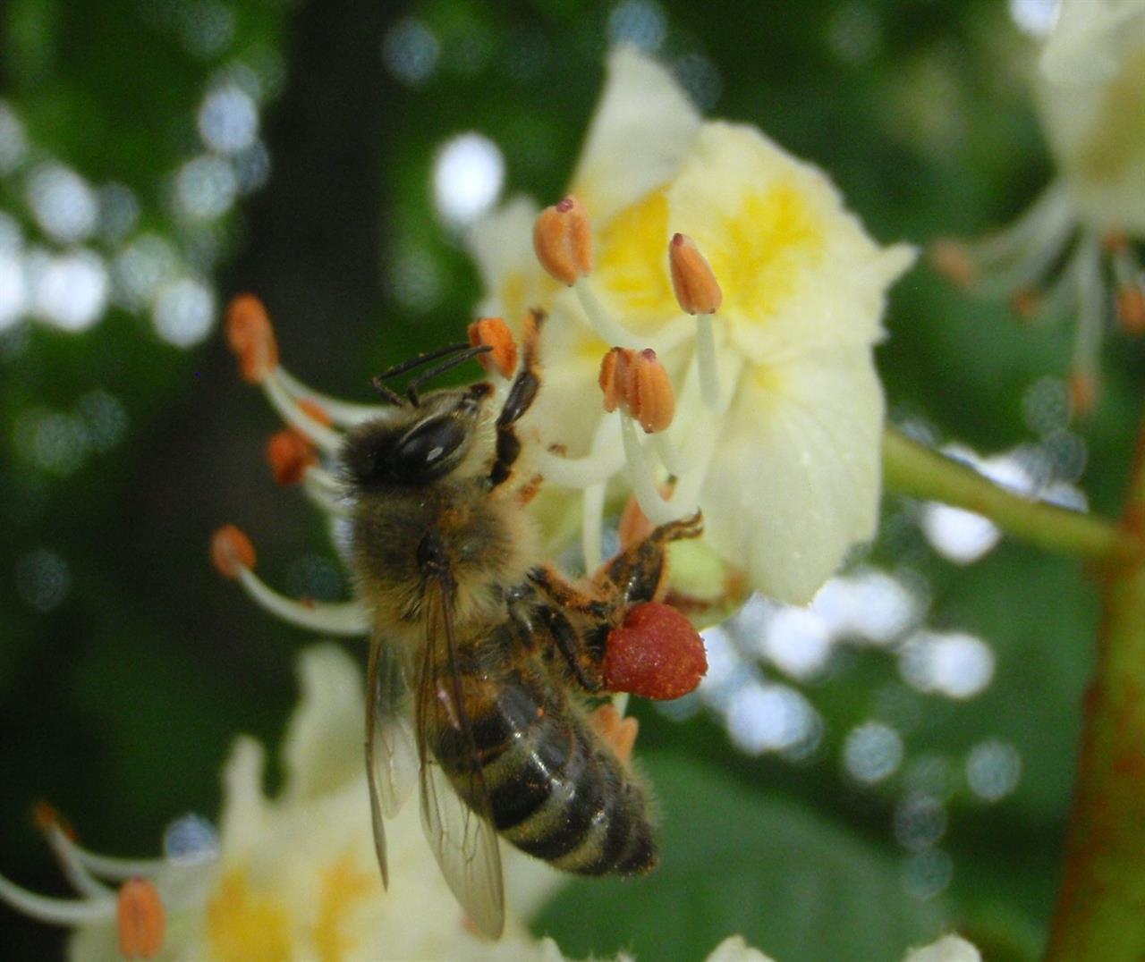 Grävelsta bin