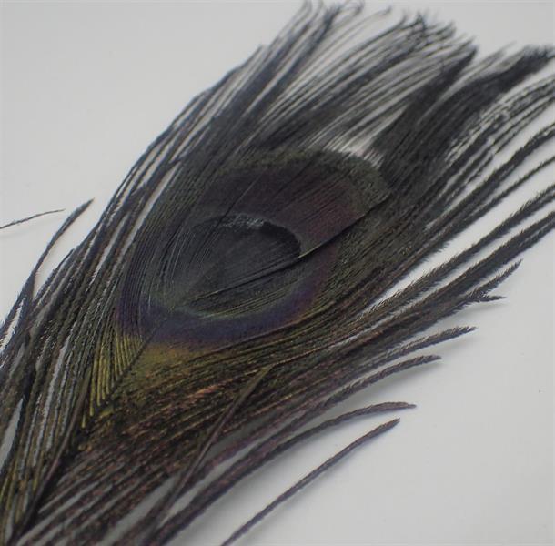 Påfågel ögonfjäder svart