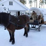 Tur med hest og vogn. Må forhåndsbestilles.