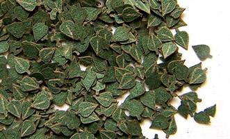 Grønne Løvblader - Bjørk