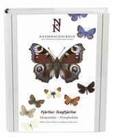 Fjärilar: Dagfjärilar