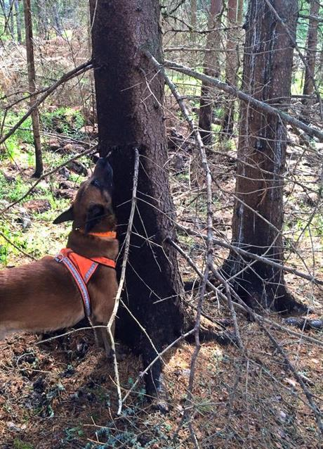 Hiro markerar brännskadat träd