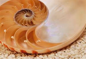 Komar fototapet Nautilus