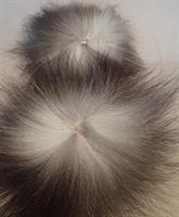 Silverräv svansbit