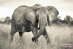 Komar fototapet Elephant Fiber bakside
