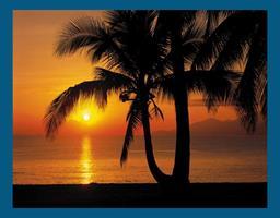 Komar fototapet Palmy Beach Sunrise