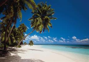 Komar fototapet Maldives