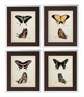 Tavlor Butterfly profiles, set om 4 st