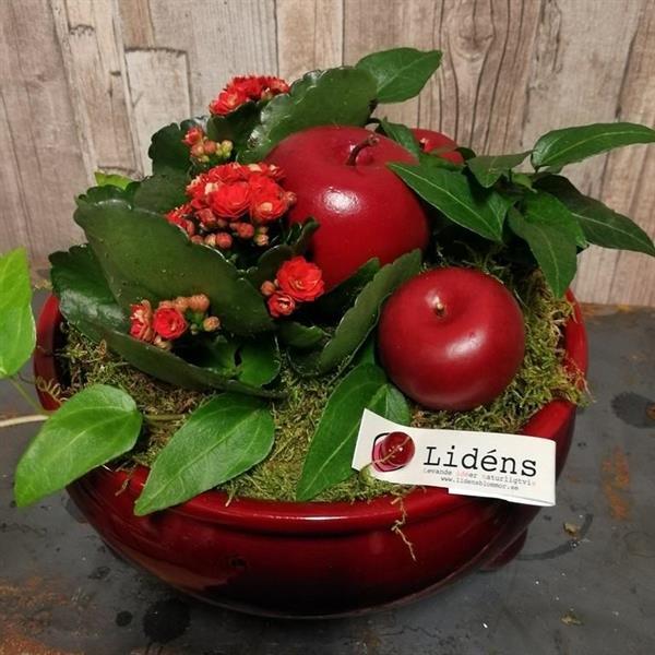 Julplantering